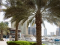 Yacht Club Dubai Marina
