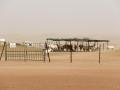 Oryx - Désert - Dubai